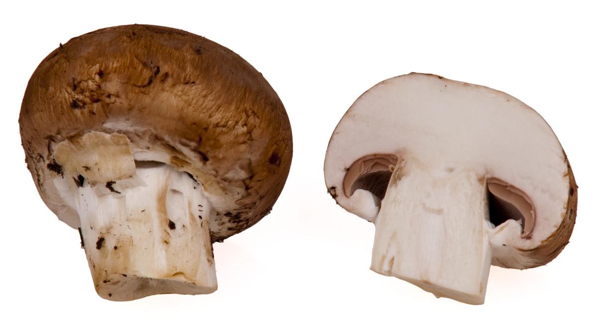 Baby Portobella mushrooms (Agaricus bisporus)