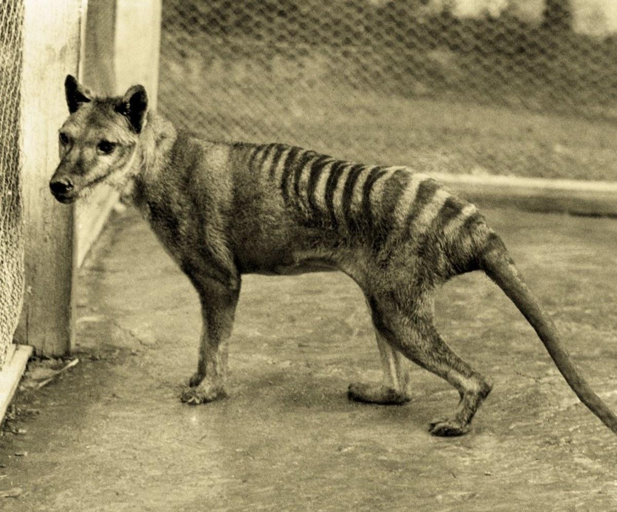 7 Bizarre Extinct Creatures You Haven't Heard