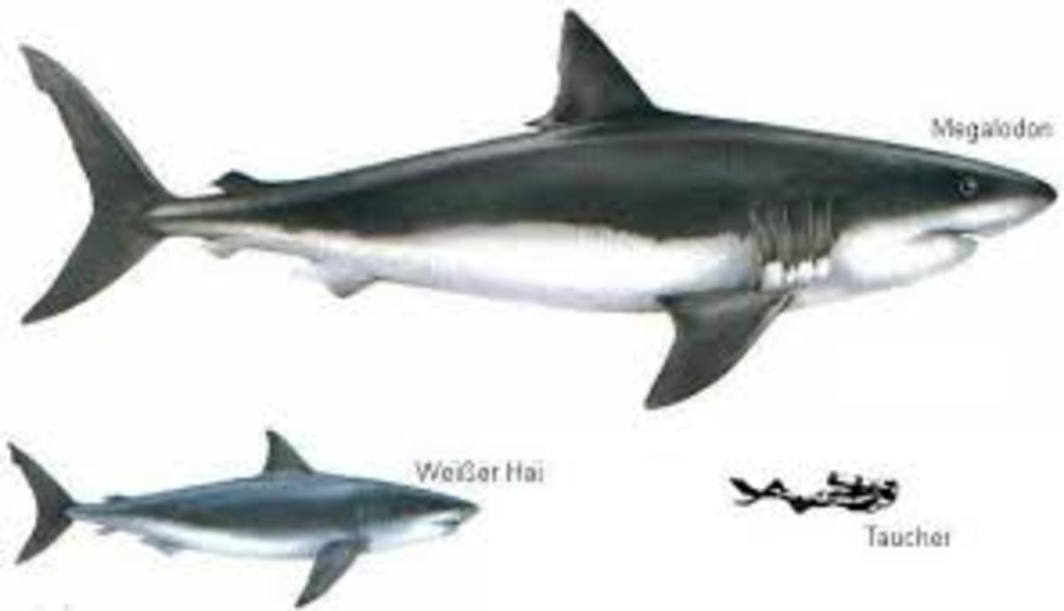 7-bizarre-extinct-creatures-you-havent-heard