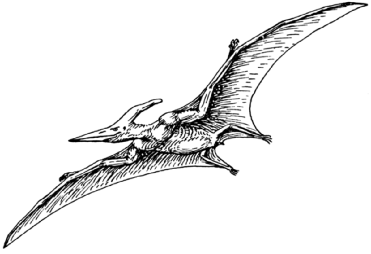 Interesting Facts About The Pterodactyl