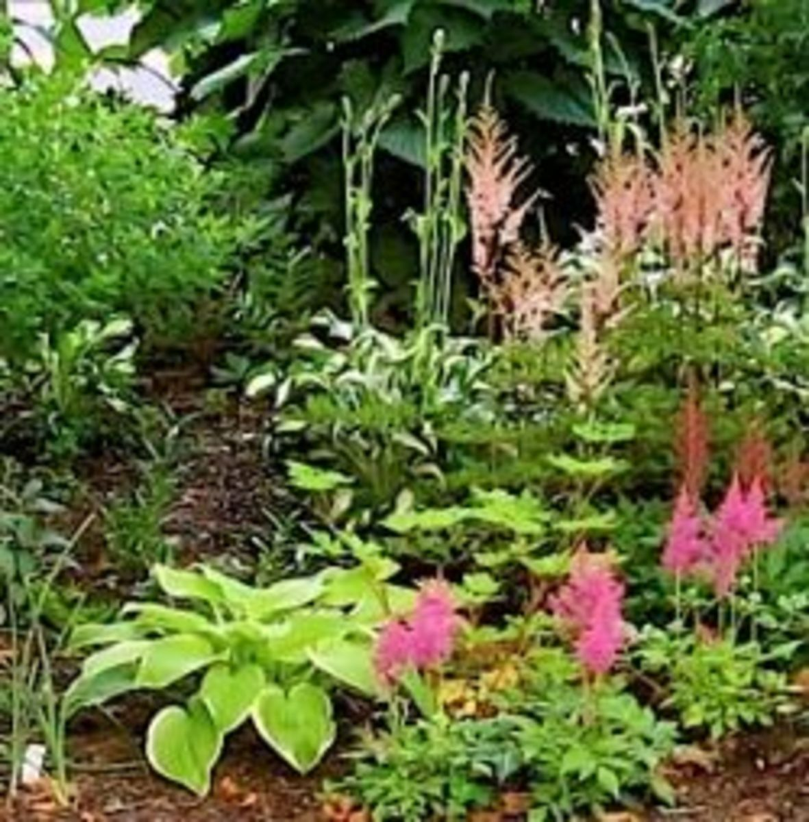 10 awesome easy care perennial plants hubpages for Easy care perennial plants