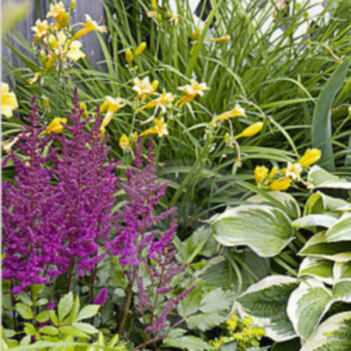 Astibe, daylilies, and hostas in a part shade perennial border.