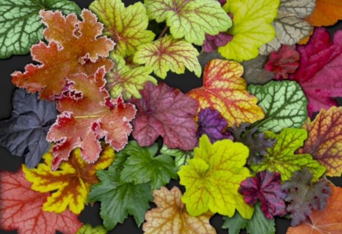 10-awesome-easy-care-perennial-plants