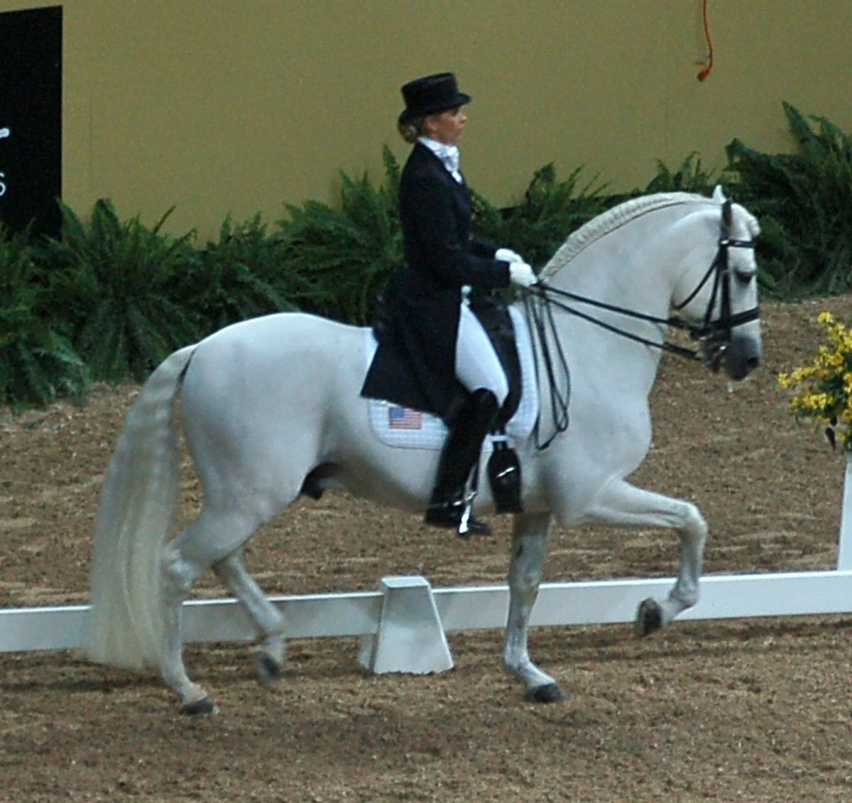 Andalusian competing in dressage.