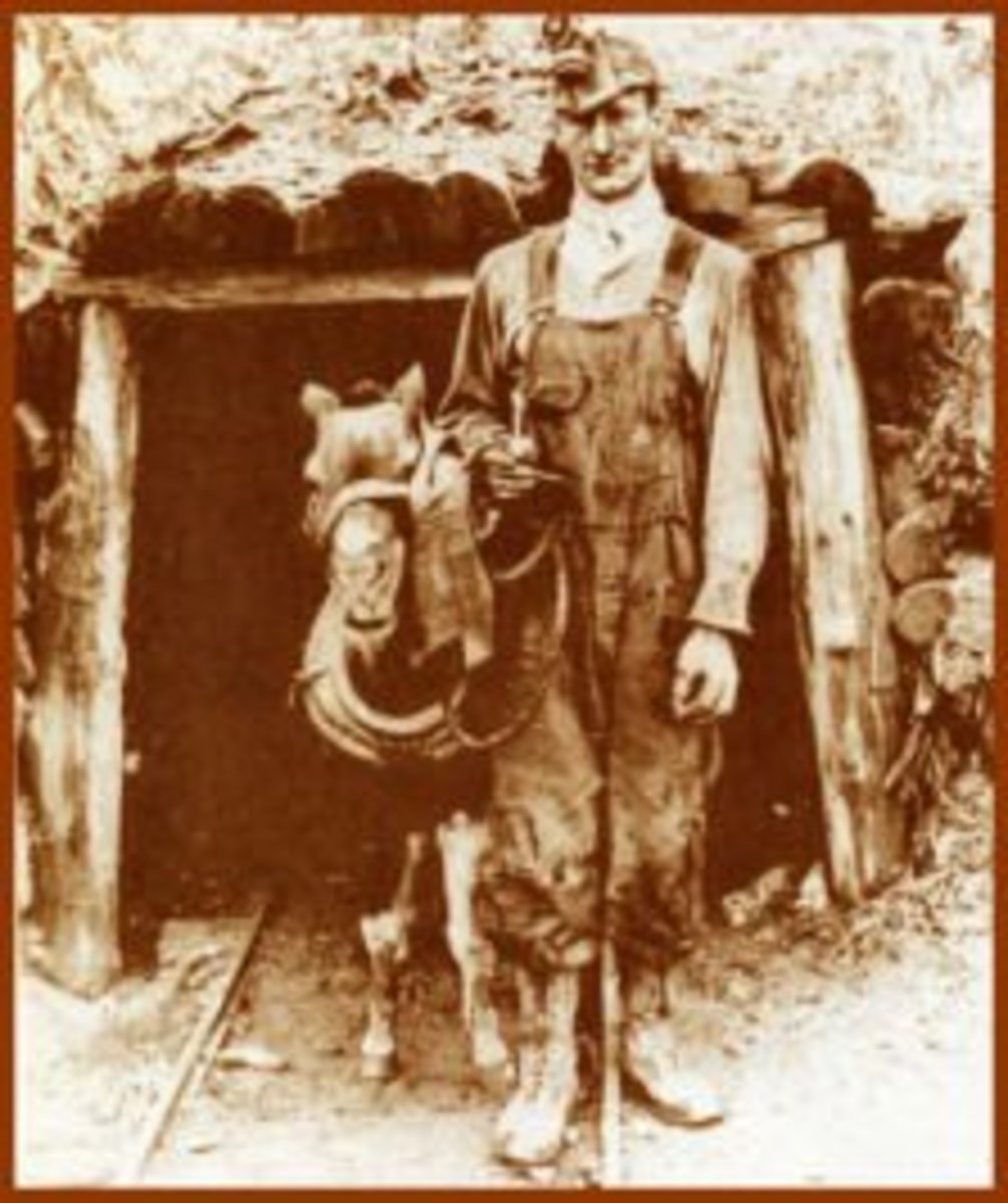 Virginia miner bringing a working Shetland pony out of a mine.