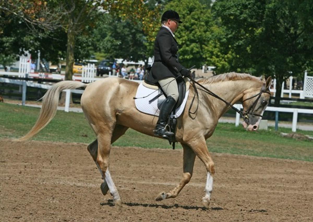 10 Interesting Horse Breeds