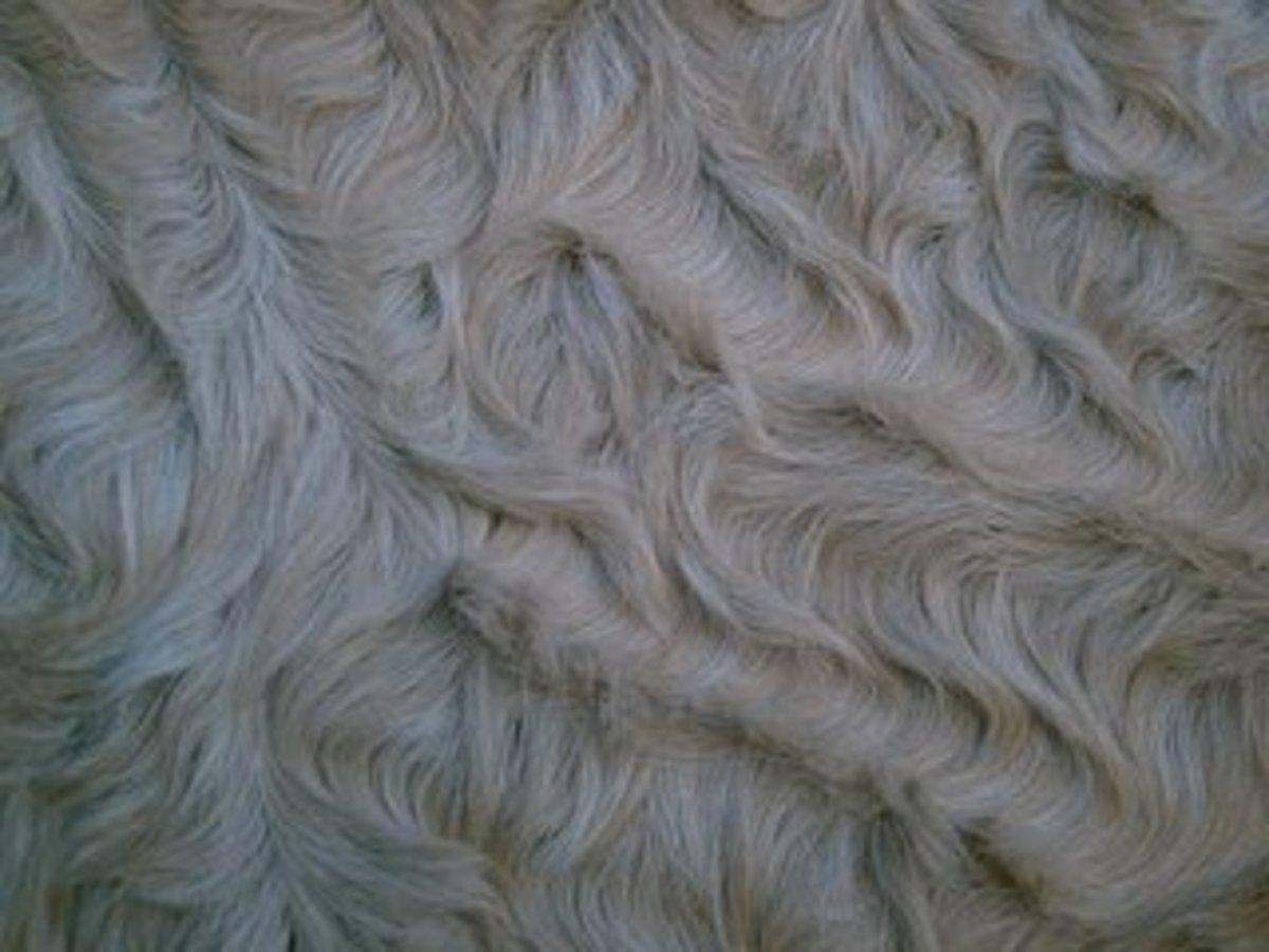 Close up of Bashkir Curly coat.