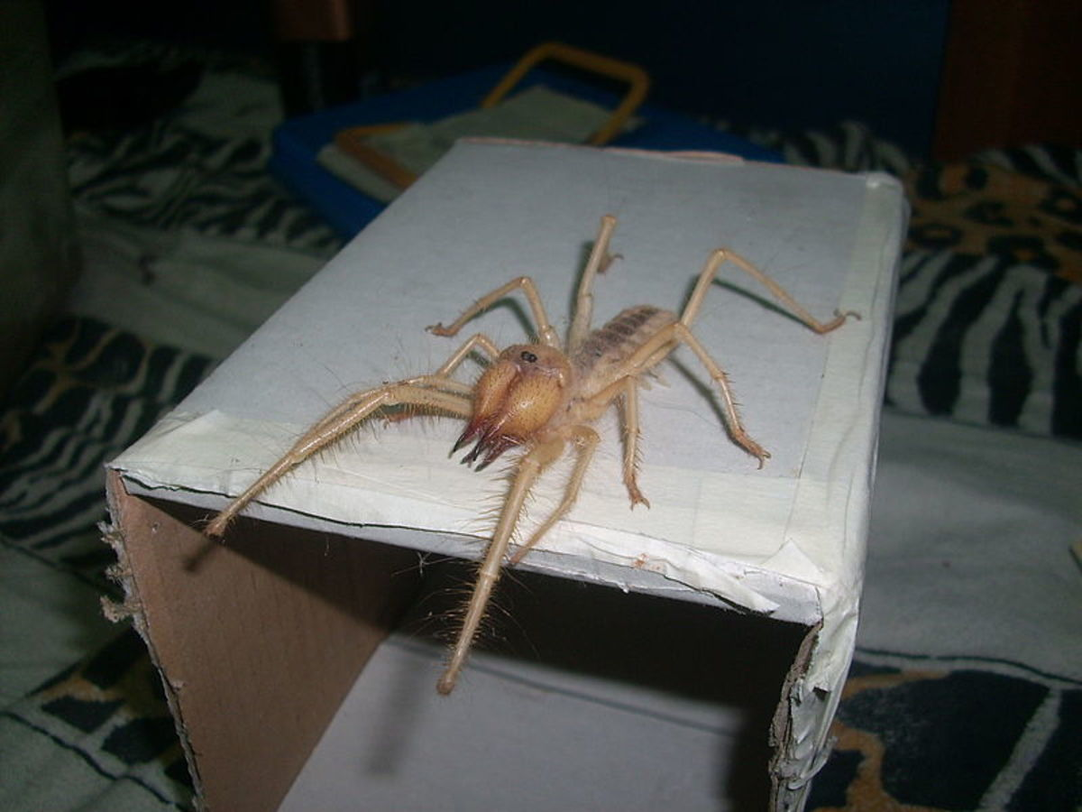 I don't know about you but I don't want a camel spider wandering around my house. Even if it can't out run trucks or kill you with its bite.