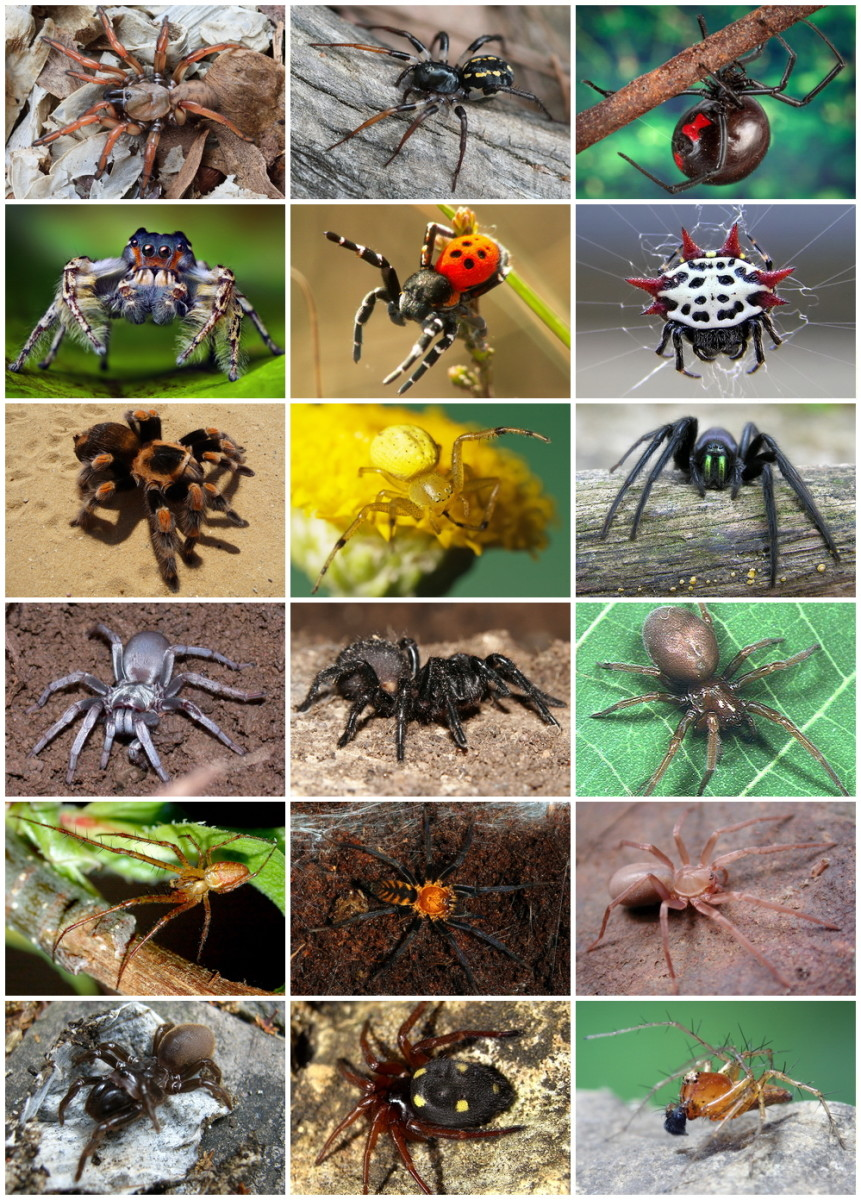 Top 10 Myths About Spiders   HubPages