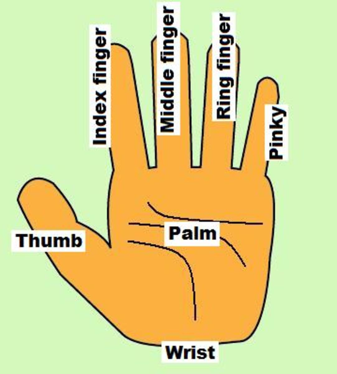 Names of fingers of your  hand
