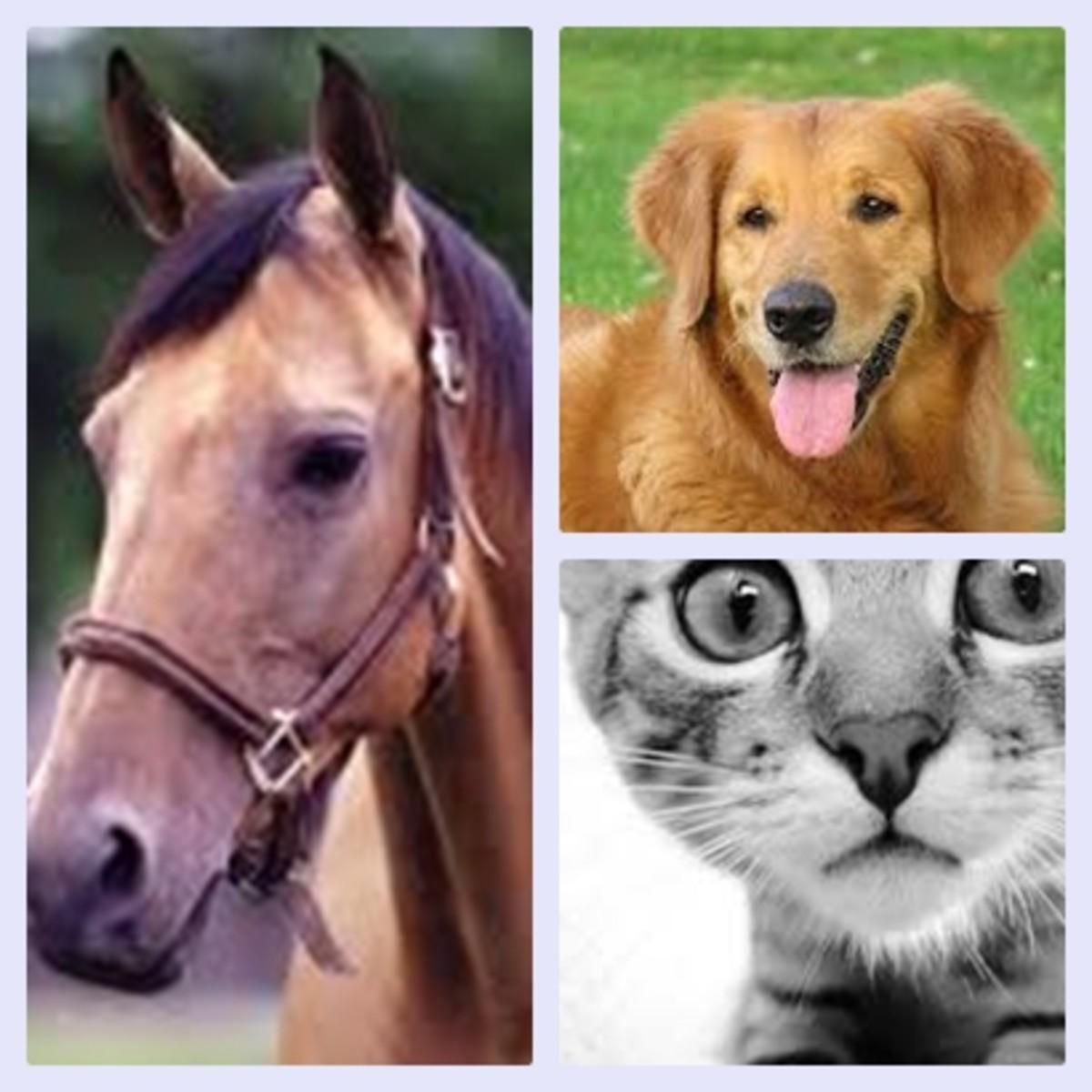 Placentals Animals