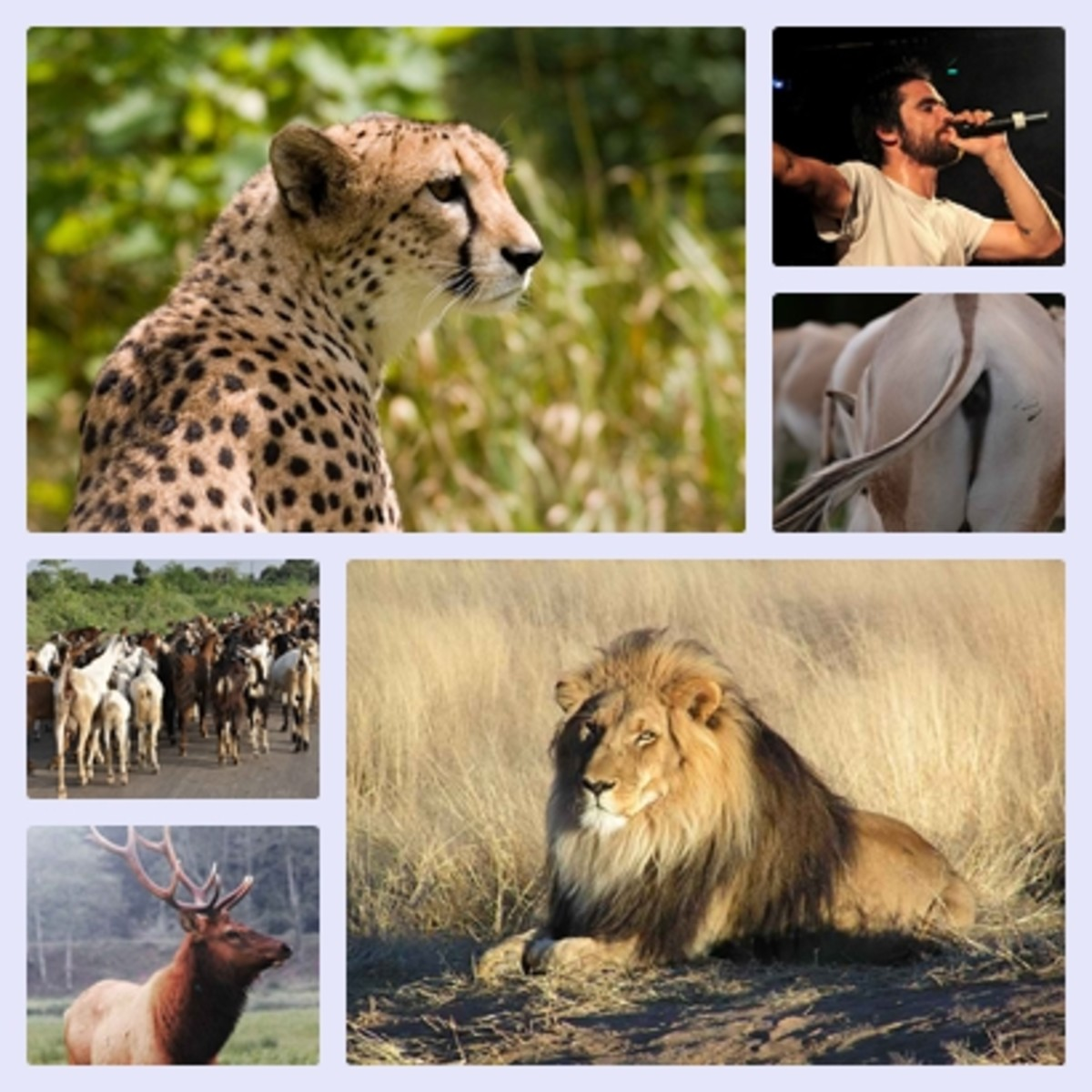 Facts about Mammals: It's Characteristics and Habitats