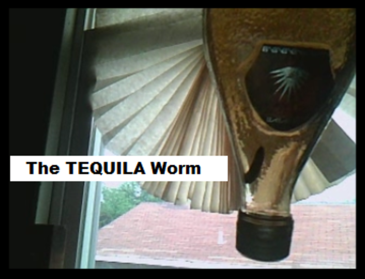 That's a REAL tequila worm in an old tequila bottle that was given to me.