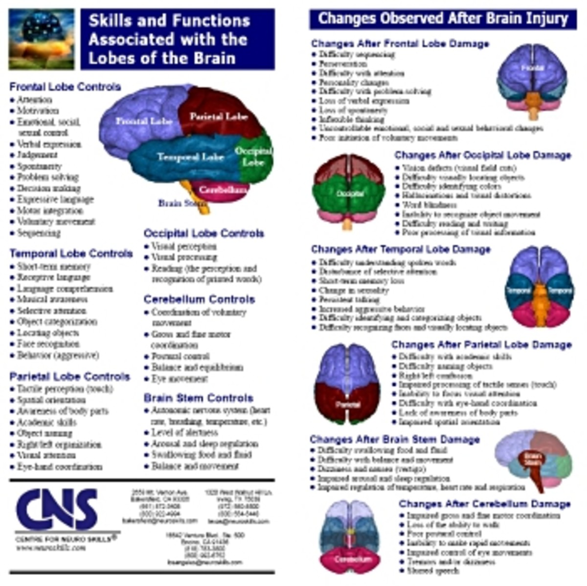brain structure and function chart pdf