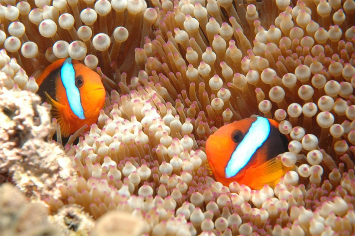 """Finding Nemo"" has helped millions of children learn more about the ocean."