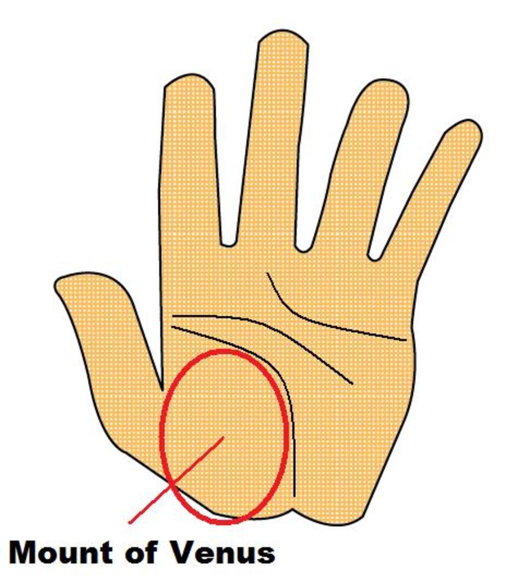 Mount of Venus on the Palm