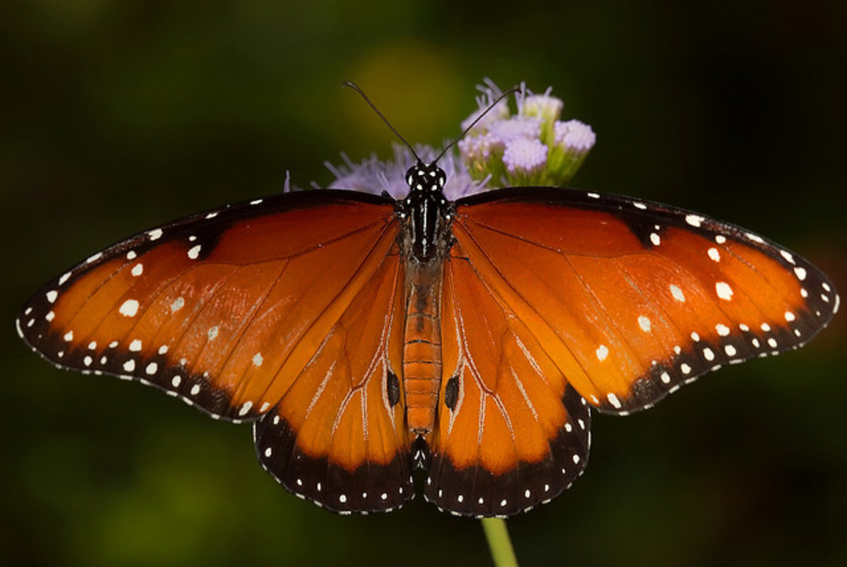 Top 10 Beautiful Butterflies of the USA