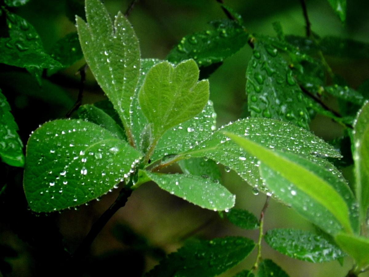 wild-plants-that-you-can-eat-in-a-surivial-situation-10-edible-plants-that-grow-in-the-wild
