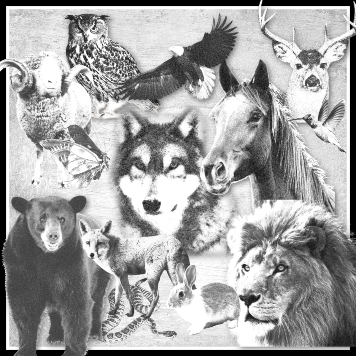 Animal Medicine Totems and Spirit Guides: Learning the Difference and Finding Your Connection