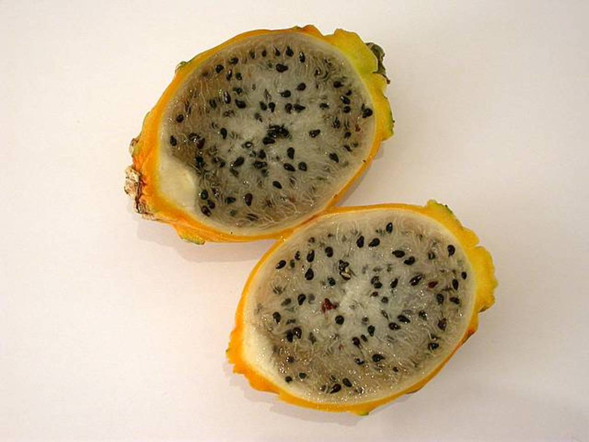 yellow skinned, white fleshed dragon fruit