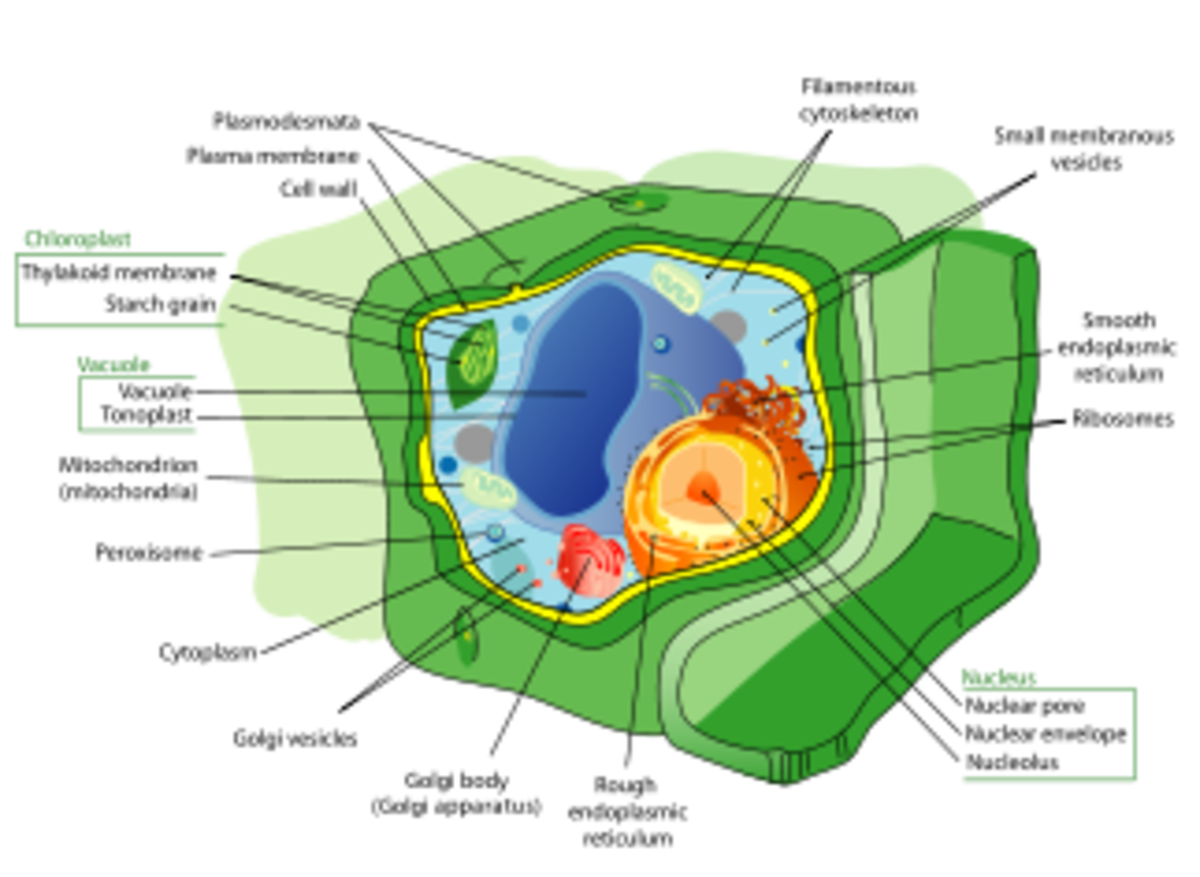 Labelled organelles of a plant cell