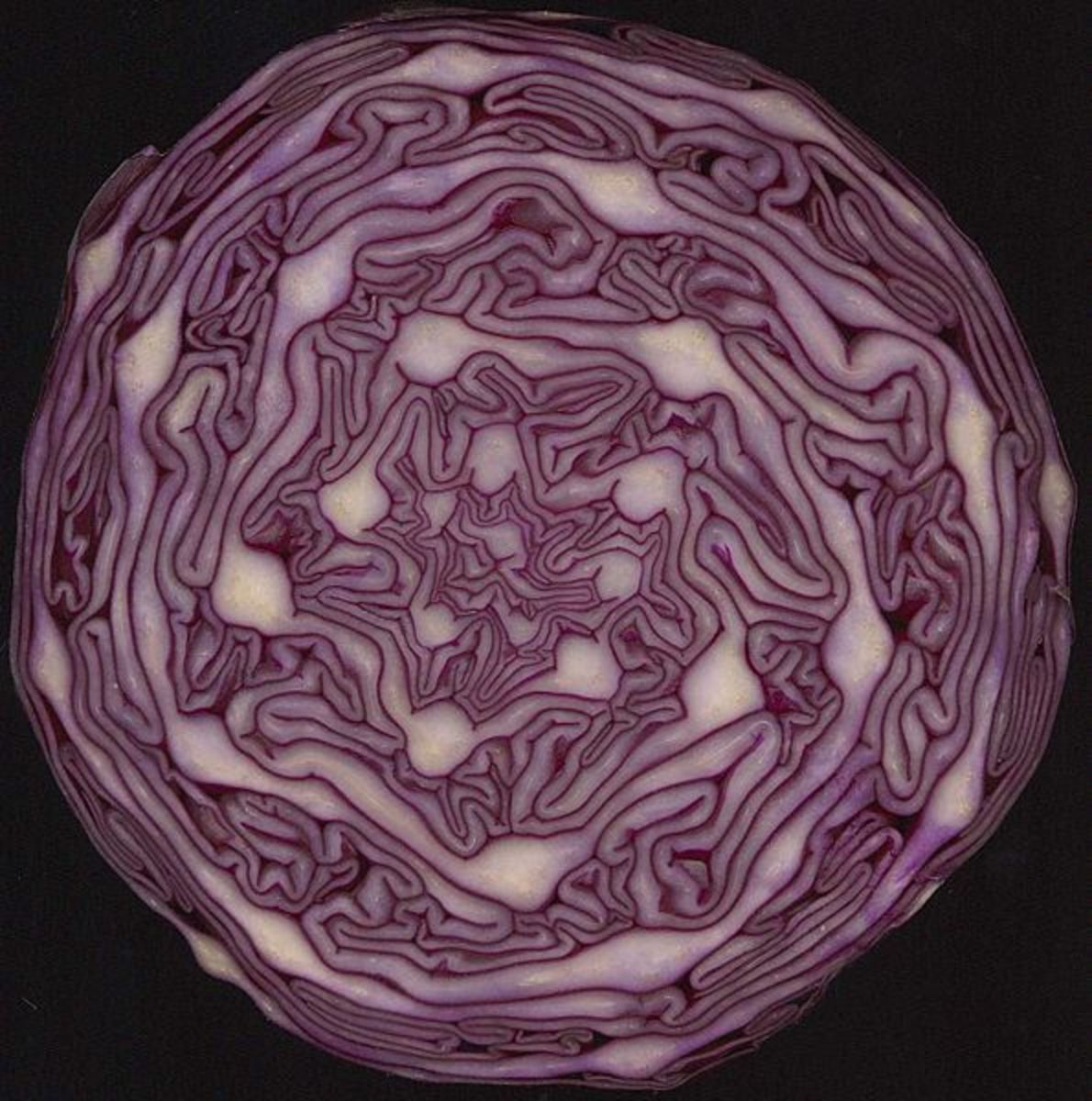 Cabbage has a beautiful color. The rich color is a sign of antioxidents like anthocyanin and others.