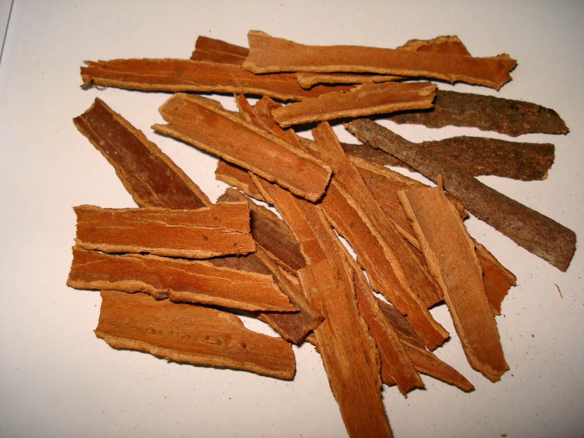 Cinnamon harvested in Pakistan. This spice is actually the bark from the cinnamon tree.