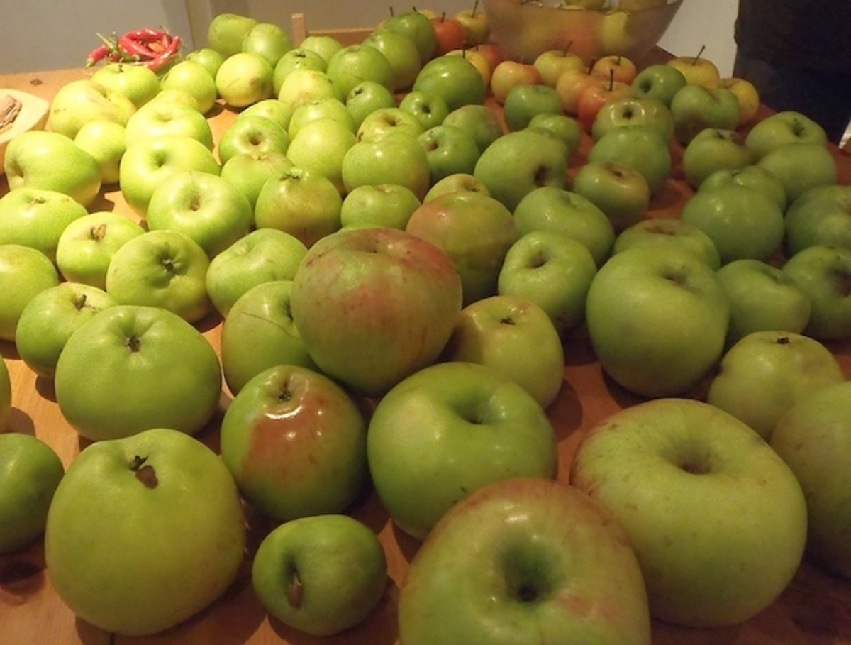 Some the the apples we find for free!