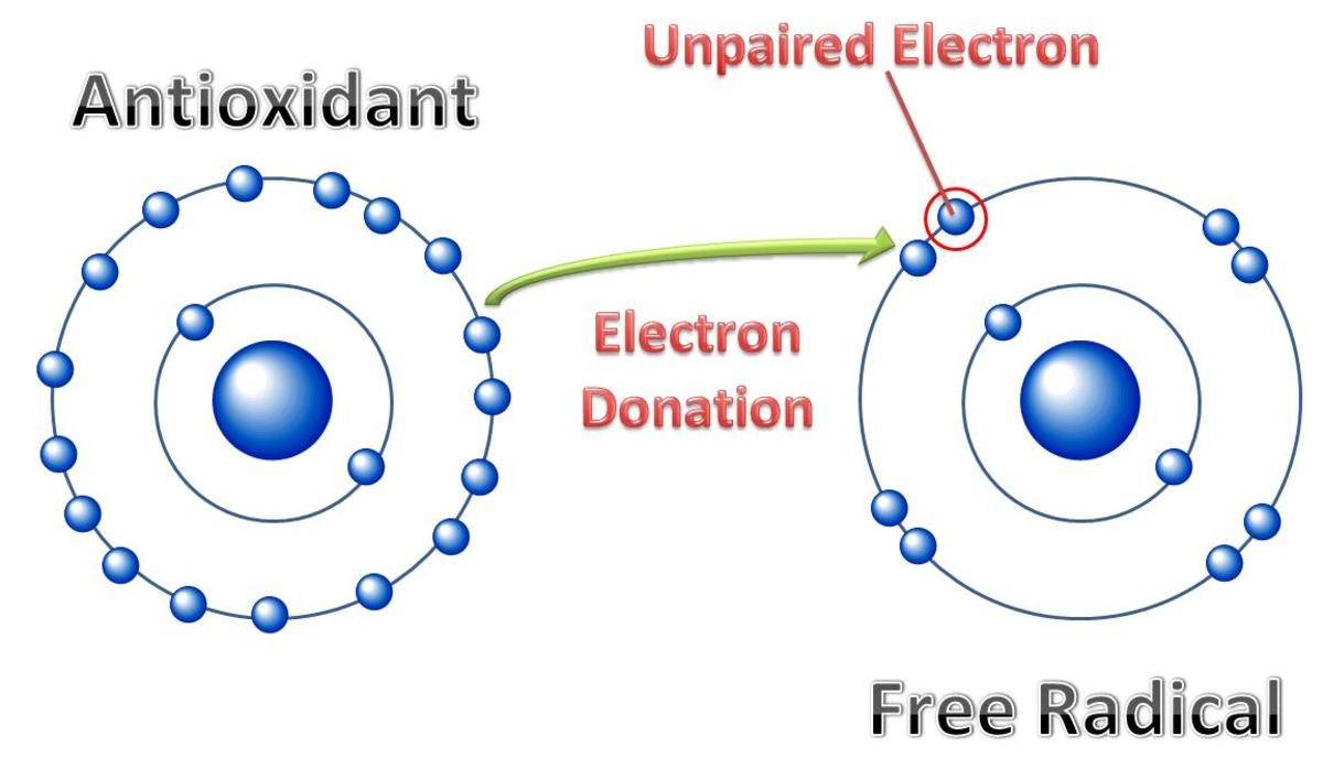 This shows the atom with electrons. The science that studies this is chemistry since the movement of electrons is what determines the chemical reaction. So I know a lot about this since I am a chemist.