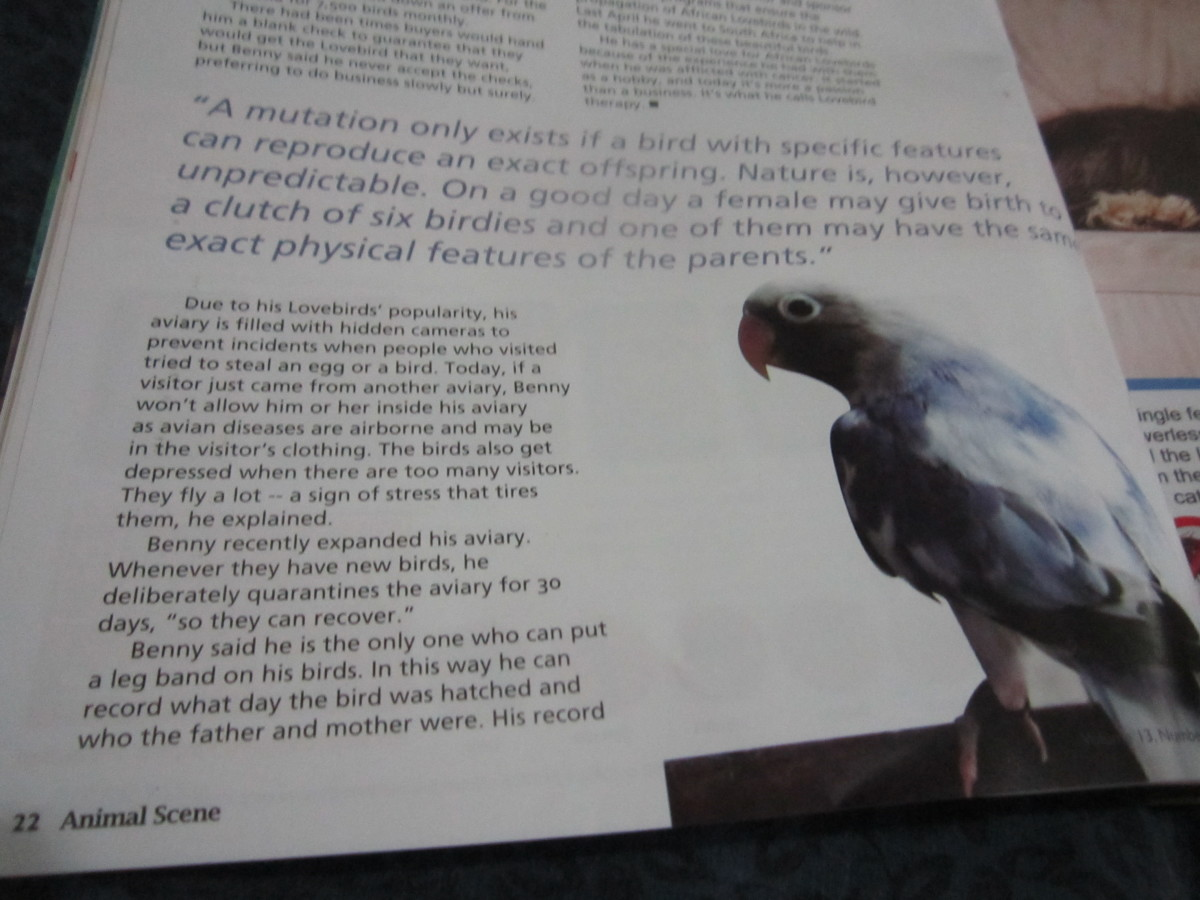 I took the photo of my magazine article. The photo in the magazine was used from Badilla's website with his permission.