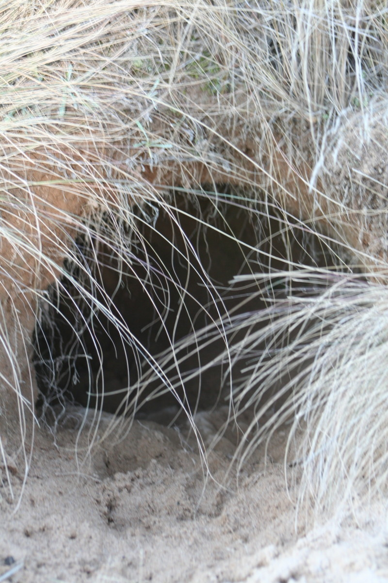 The entrance to a wombat hole. A mother and her children survived a killer fire storm by taking refuge in a wombat burrow in 2009.
