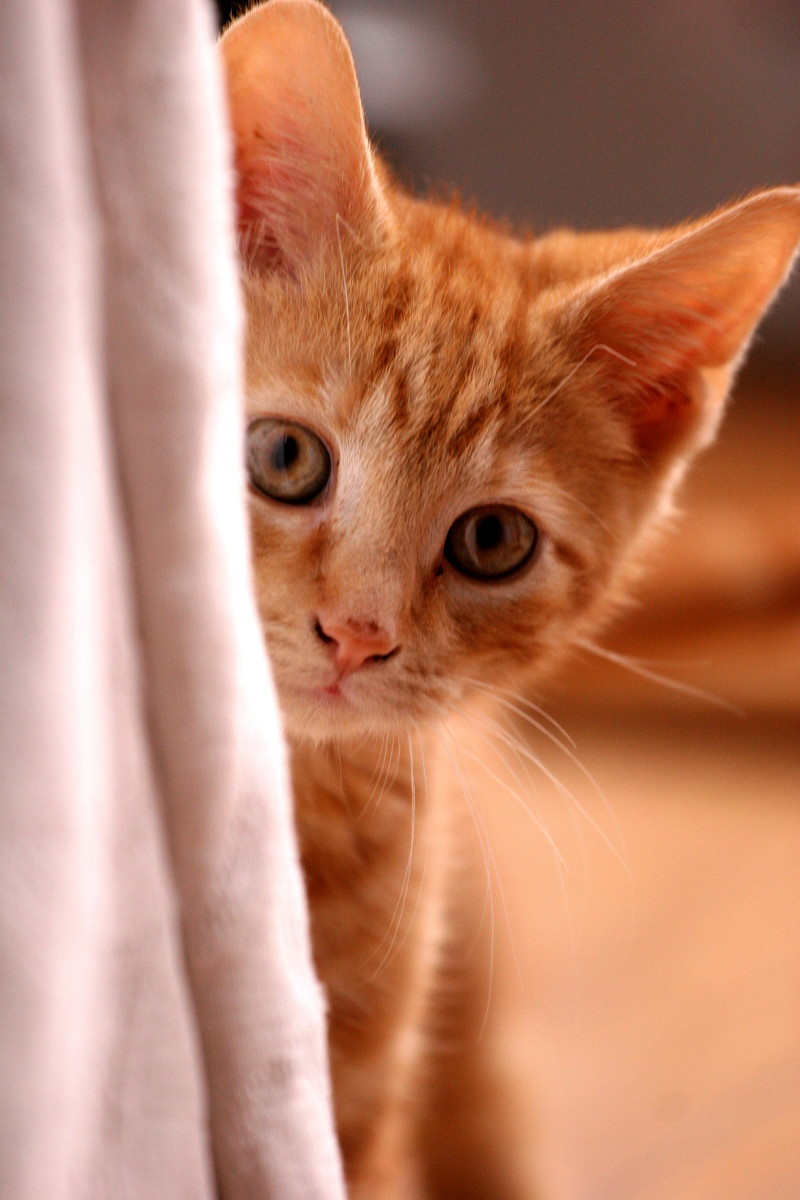 Best tips on how to transport your cat by car or traveling with your feline