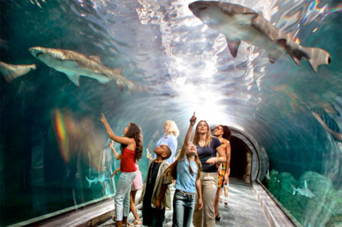 Sharks swim over tourists at the Aquarium tanks