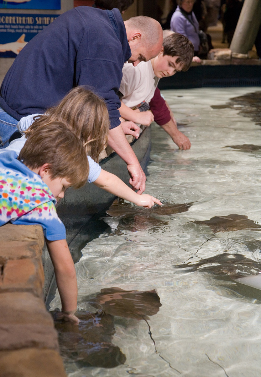 Children can pet baby manta rays at water tanks