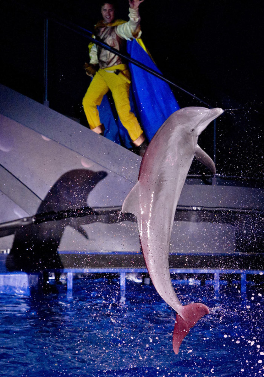 Dolphin Tales is a little bit tacky, so avoid losing one hour of your trip if jumping dolphins won´t impress you