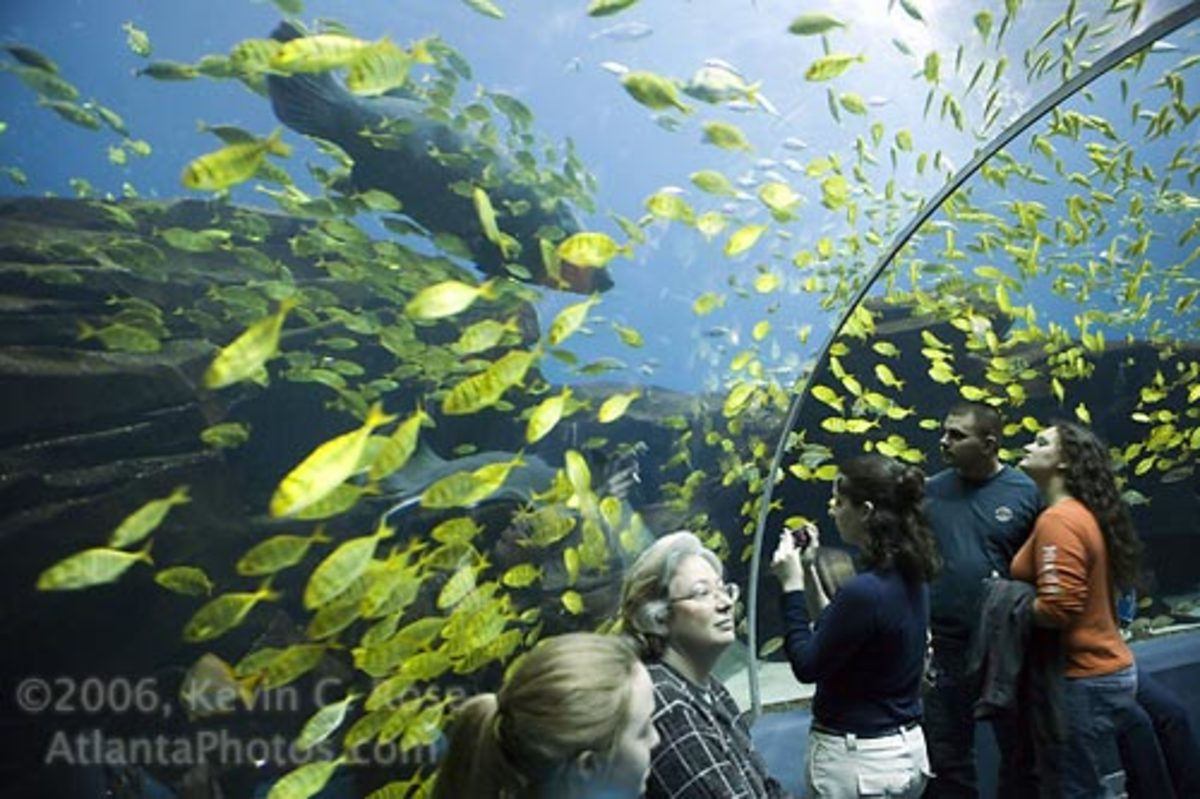 Colorfull fish swim around the viewers