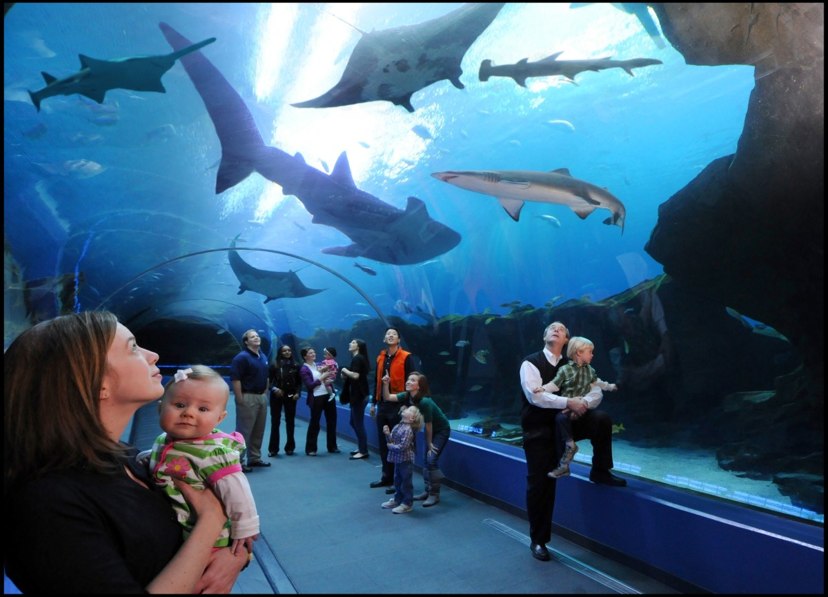 Underwater Passages give tourists a 360 view of the entire aquarium. Just like being on the ocean floor.