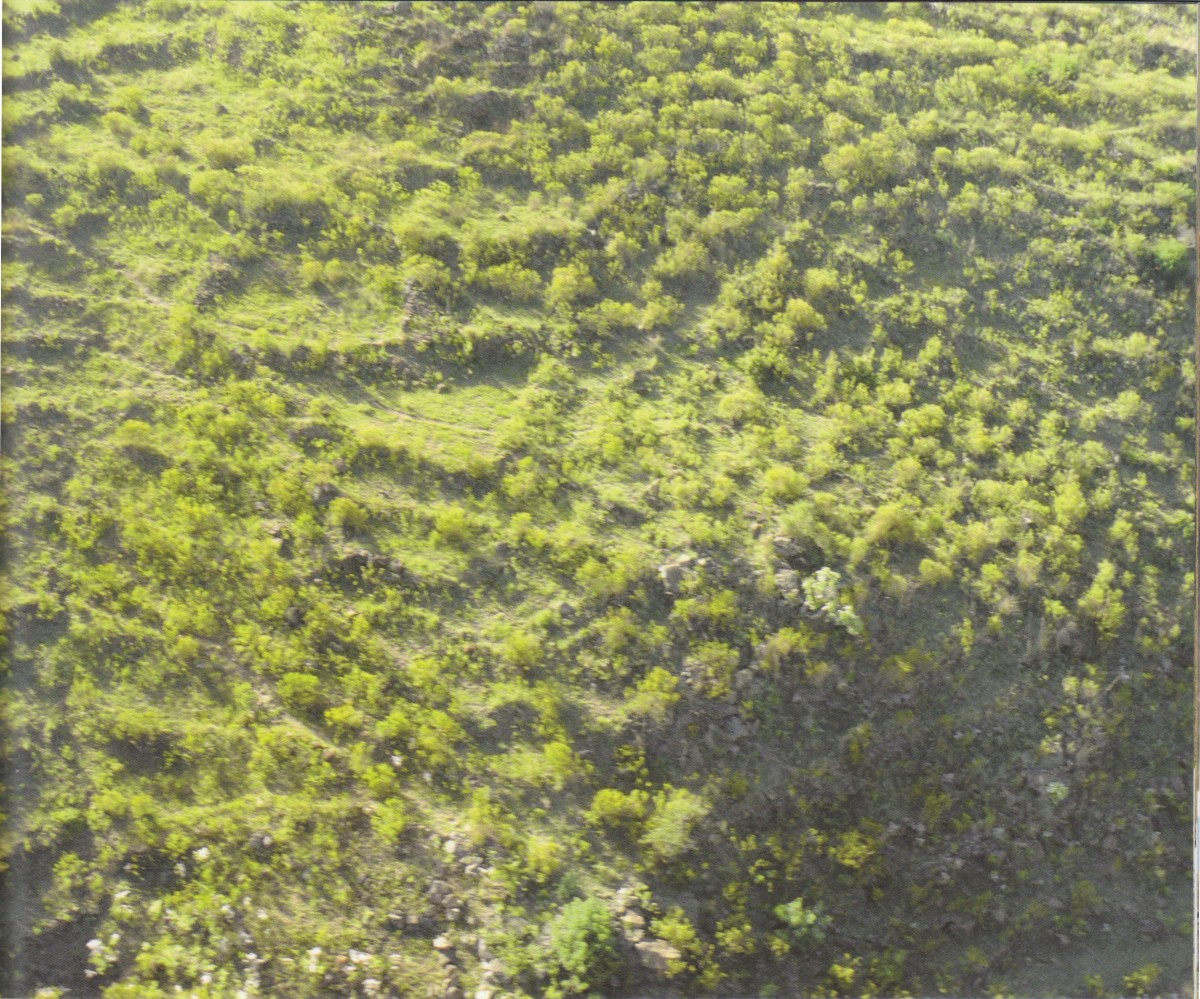 Tellinger: A View of the Ancient Terraces and the complexity of teir structure-aaist a steep slope