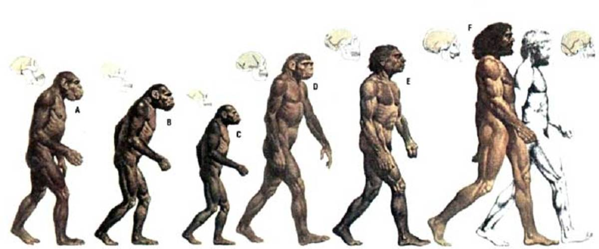 Human Evolution: Darwin and the Origin of Species, as evidence of Evolution