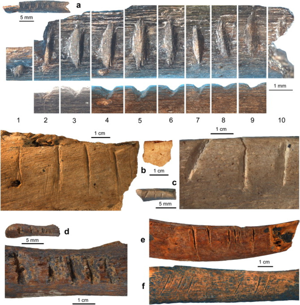 Notched bone fragments from Post-Howiesons Poort (a–b), Howiesons Poort (c), and Pre-Still Bay (d) layers at Sibudu Cave compared to cut-marked rib fragments (e–f).