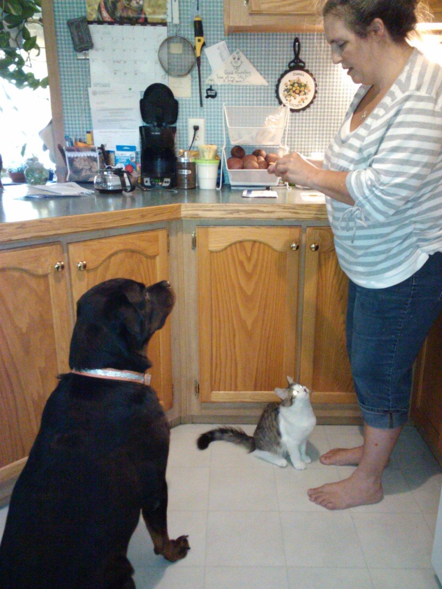 Treat time!