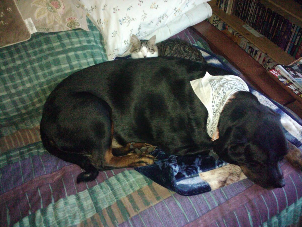 Summer siesta with his buddy, Jasper