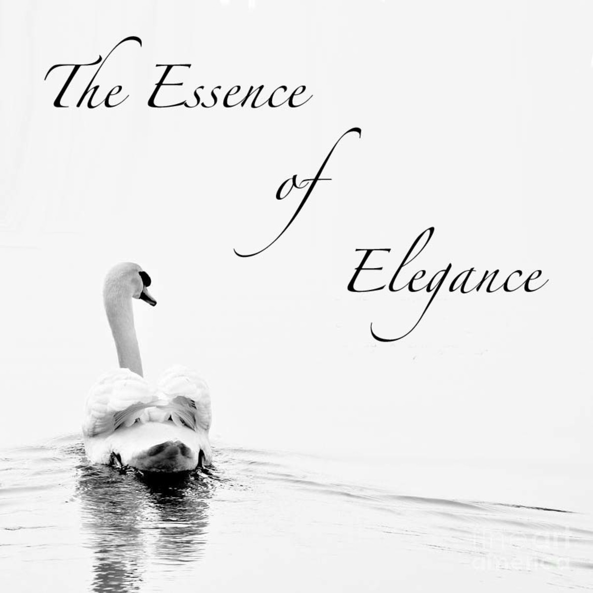 The Essence of Elegance