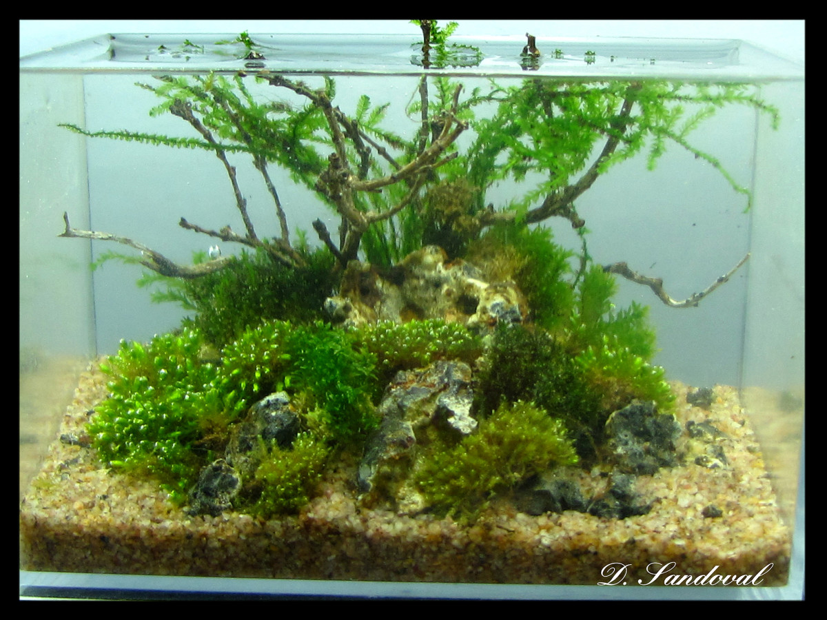 A planted tank that has a centered piece will have the viewer locked onto the middle drawing attention away from other plants strewn across the tank depth.