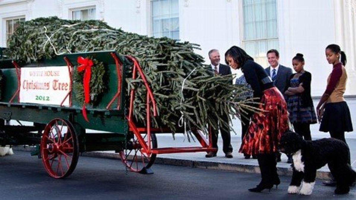 Michelle Obama takes delivery of White House tree