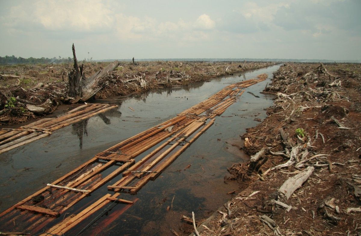 Now that most of the forests on the islands of Sumatra and Borneo have been logged for timber and oil palm cultivation, Indonesia has turned its focus to West Papua, which it considers to be the next frontier. The photo is from Riau, Sumatra.