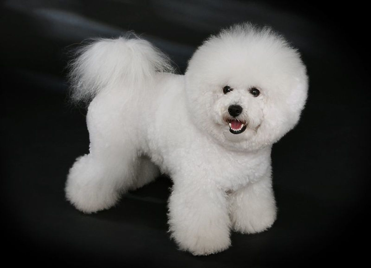 getting-a-dog-breeds-that-suit-your-lifestyle