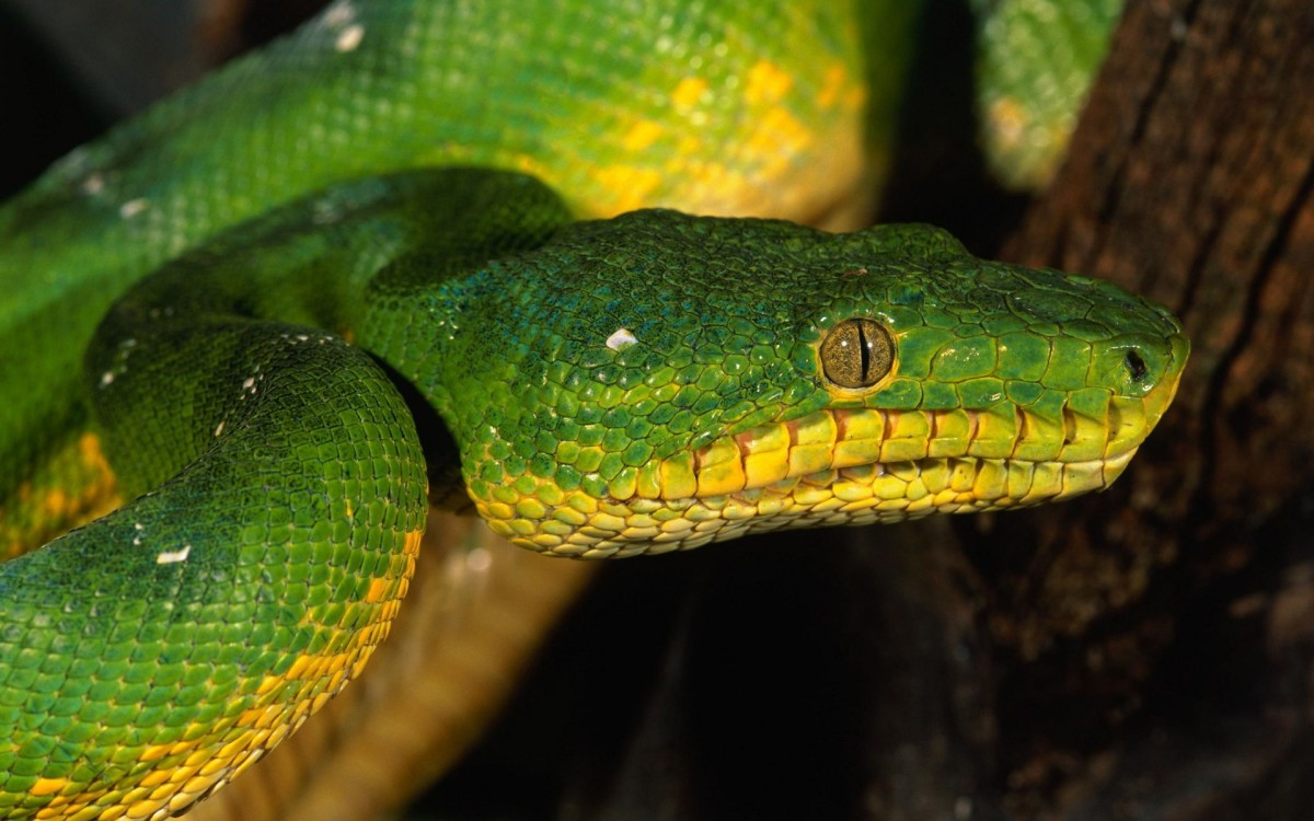 People are mortified of snakes-with GOOD reasons. Snakes are dangerous & life-threatening animals.  Some kill by constriction while others kill by neurotoxic venom.  Snakes AREN'T animals to play with it whatever!They are QUITE FEARSOME for a REASON!