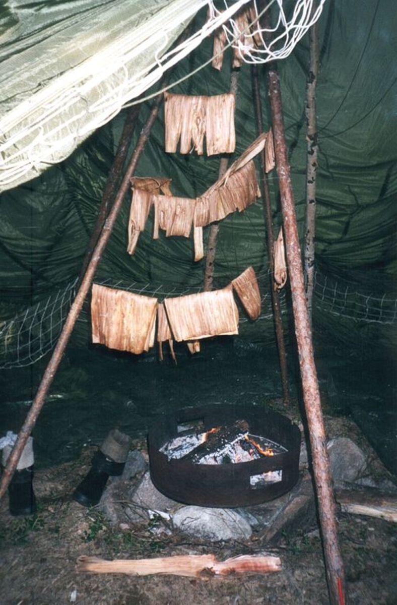 Drying a pine tree's inner bark (or phloem) to produce flour.
