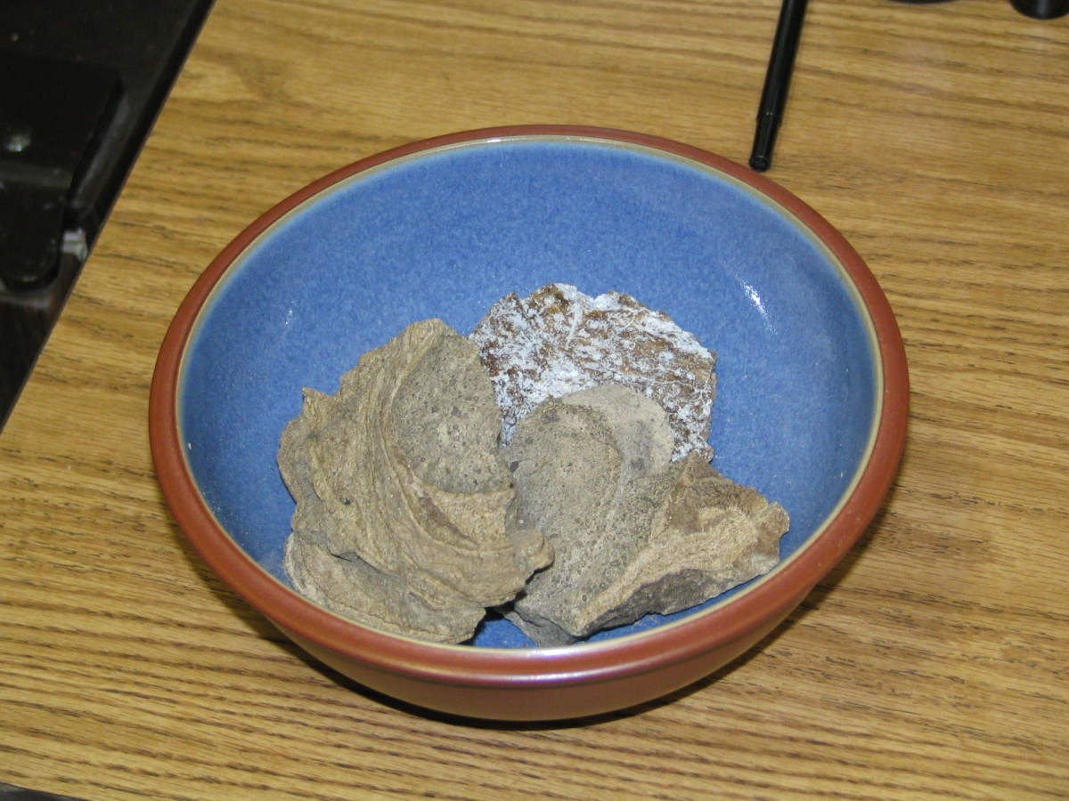 A bowl of ambergris. Some people refer to this whale secretion as 'floating gold' as its rarity and high demand pushes its value up to around $10,000 a pound (or just under half a kilo).